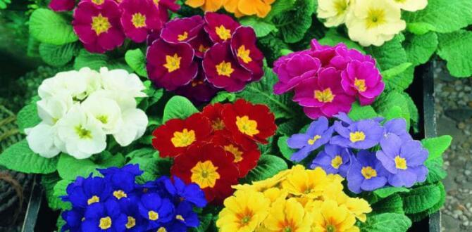 Bitki Civanperçemi ve Alıç Bitkilerinin Faydaları