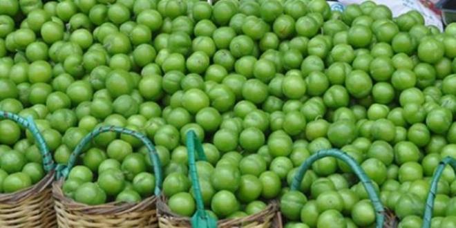 Yeşil Erik Faydaları Nelerdir ve Kalori Değeri Nekadardır?